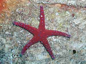 Ghardaqa Sea Star